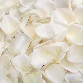 28 - Rose petals one colour - R550 per box