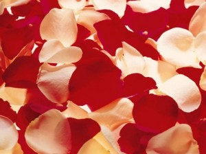 7 - Fresh Rose Petals (mixed colours) R199.00 per large flower box