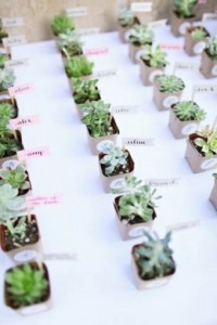 168 -Indigenous succulent plants with tags – R25 each